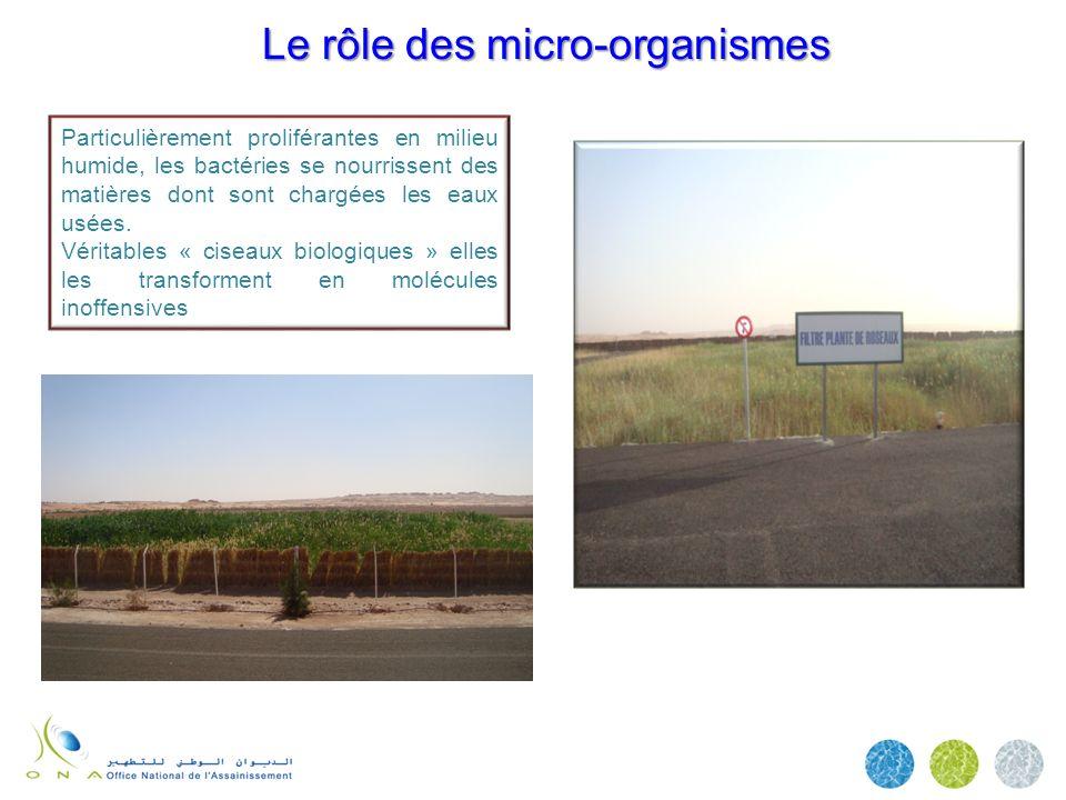Le rôle des micro-organismes Le rôle des micro-organismes Particulièrement proliférantes en milieu humide, les bactéries se nourrissent des matières d