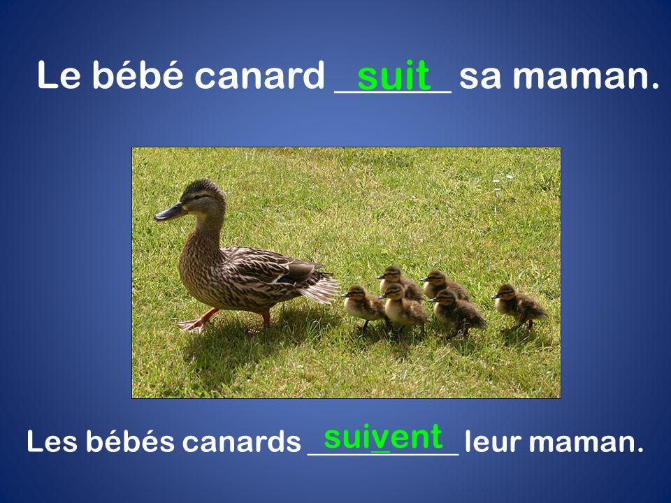 Le bébé canard ______ sa maman. suit Les bébés canards __________ leur maman. suivent