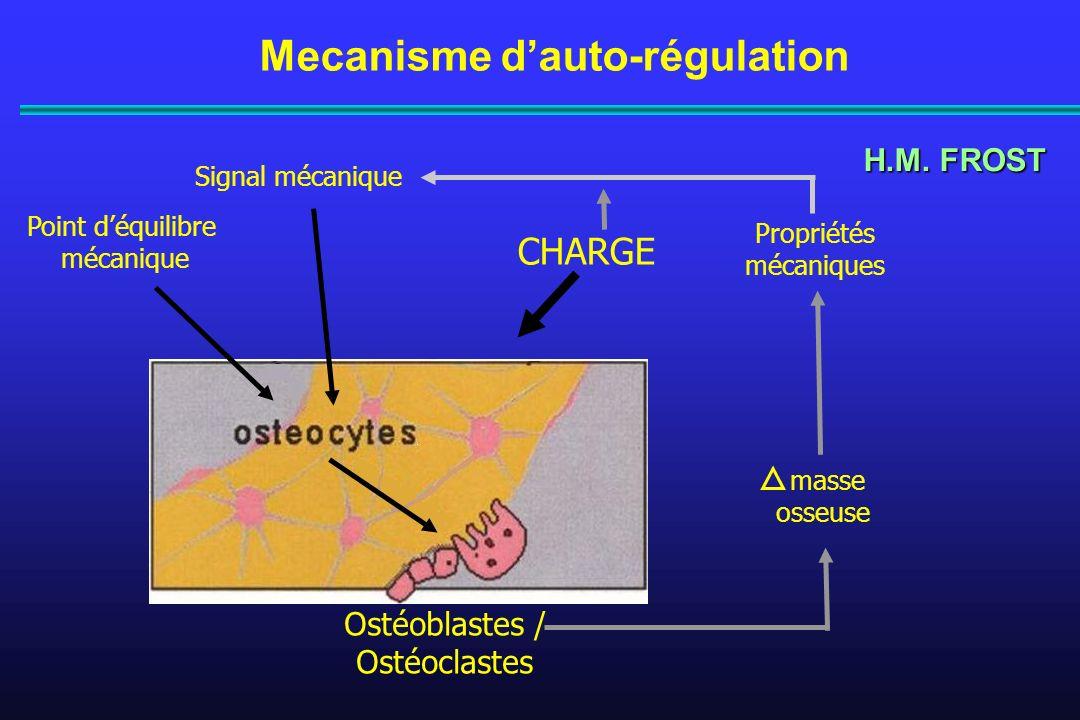 CHARGE Mecanisme dauto-régulation Ostéoblastes / Ostéoclastes Propriétés mécaniques Signal mécanique Point déquilibre mécanique H.M. FROST masse osseu