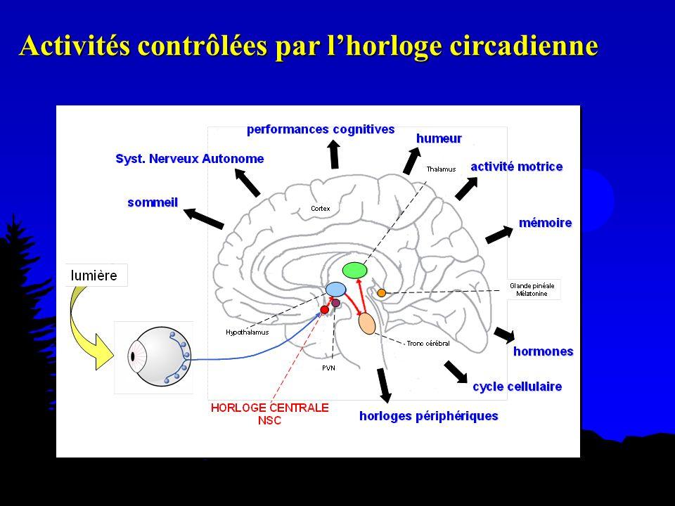 Activités contrôlées par lhorloge circadienne
