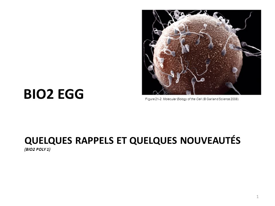 QUELQUES RAPPELS ET QUELQUES NOUVEAUTÉS (BIO2 POLY 1) BIO2 EGG Figure 21-2 Molecular Biology of the Cell (© Garland Science 2008) 1
