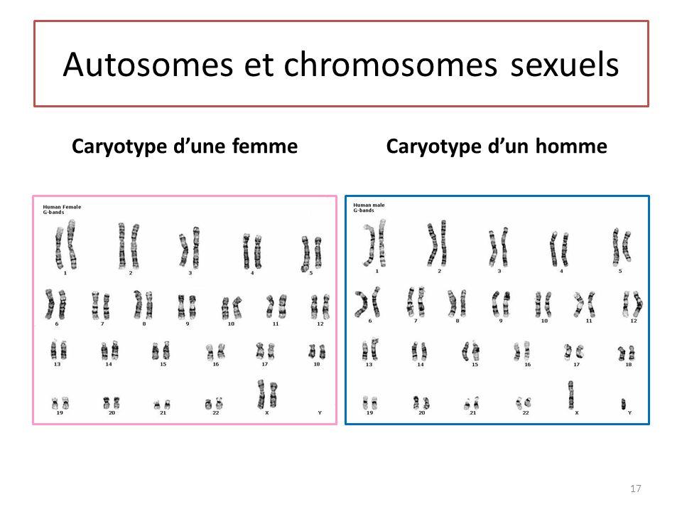 Autosomes et chromosomes sexuels Caryotype dune femmeCaryotype dun homme 17