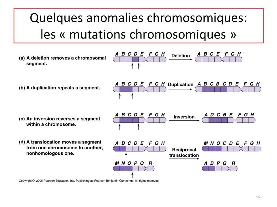 Quelques anomalies chromosomiques: les « mutations chromosomiques » 19