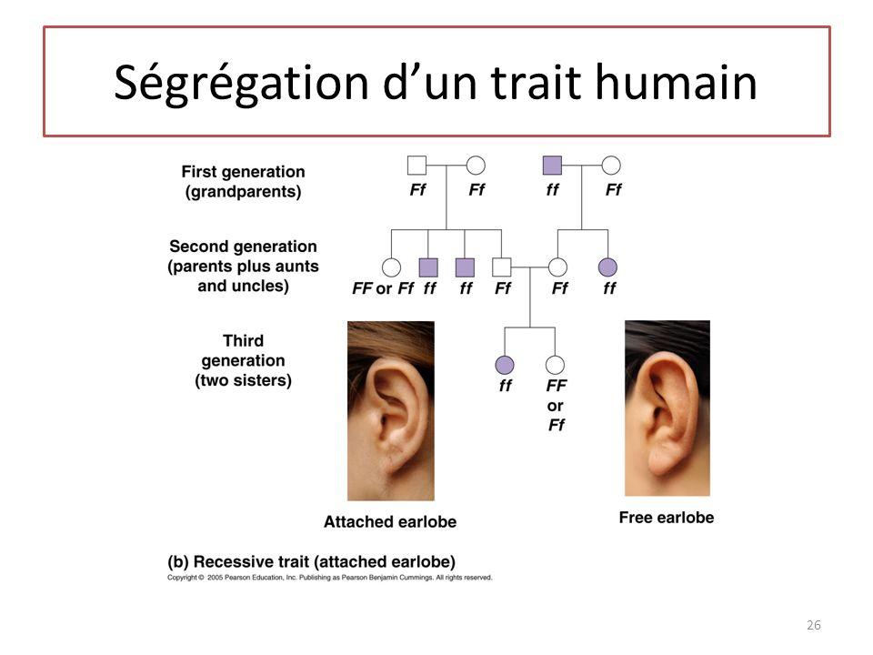 Ségrégation dun trait humain 26