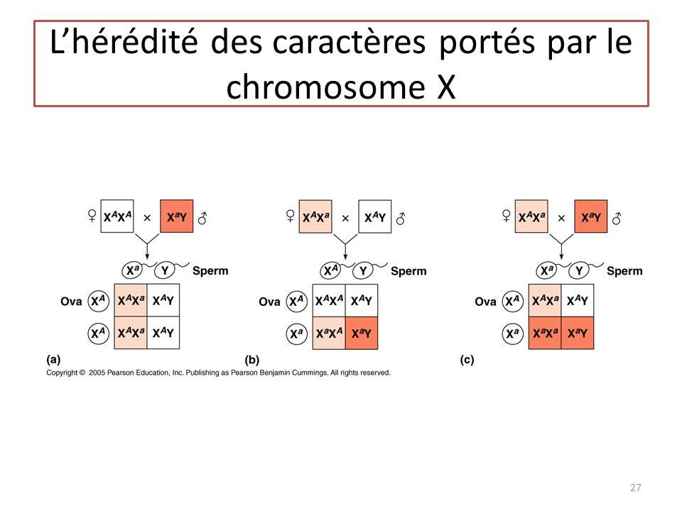 Lhérédité des caractères portés par le chromosome X 27