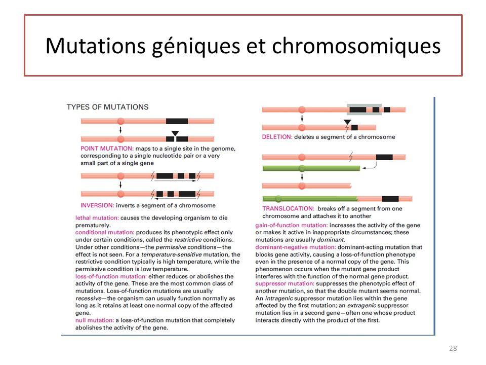 Mutations géniques et chromosomiques 28