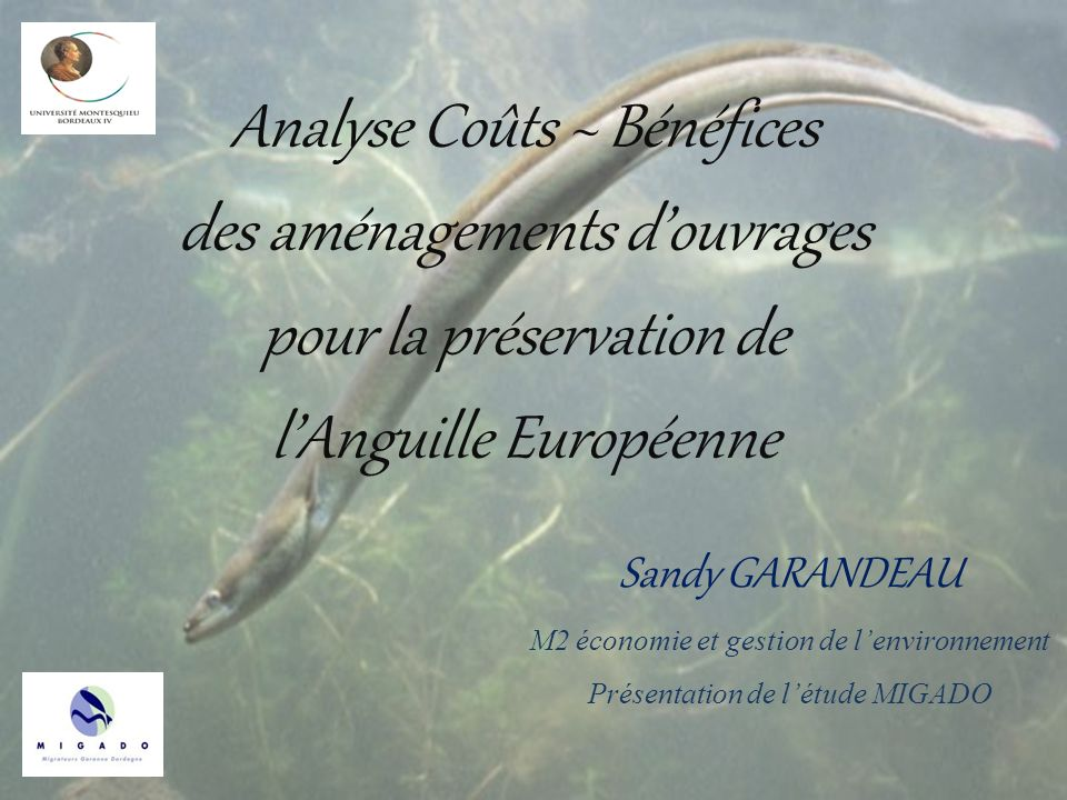 Analyse Coûts ~ Bénéfices des aménagements douvrages pour la préservation de lAnguille Européenne 1 Sandy GARANDEAU M2 économie et gestion de lenviron