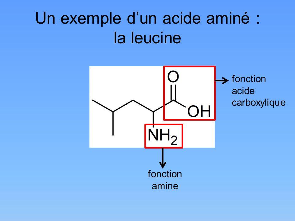 Un exemple dun acide aminé : la leucine fonction amine fonction acide carboxylique