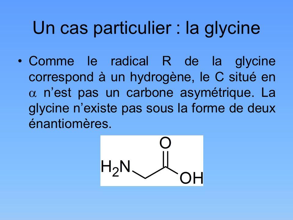 Un cas particulier : la glycine Comme le radical R de la glycine correspond à un hydrogène, le C situé en nest pas un carbone asymétrique. La glycine