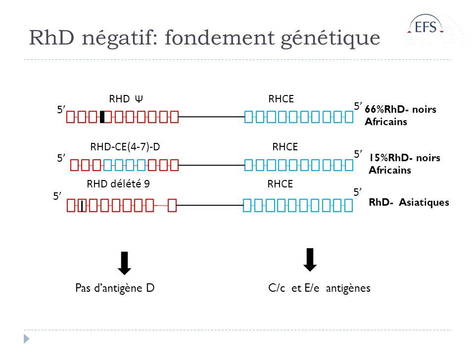 RhD négatif: fondement génétique RHD-CE(4-7)-DRHCE 5 5 RHDRHCE 5 5 Pas dantigène D 66%RhD- noirs Africains 15%RhD- noirs Africains RHD délété 9RHCE 5 5 RhD- Asiatiques C/c et E/e antigènes Ψ