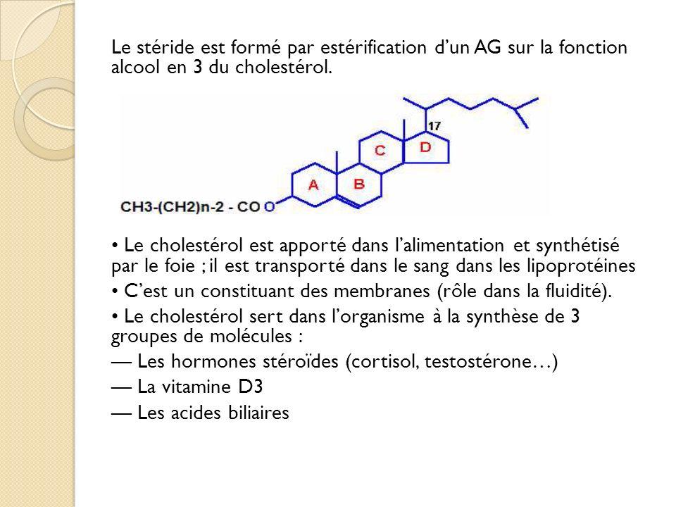 Le stéride est formé par estérification dun AG sur la fonction alcool en 3 du cholestérol.