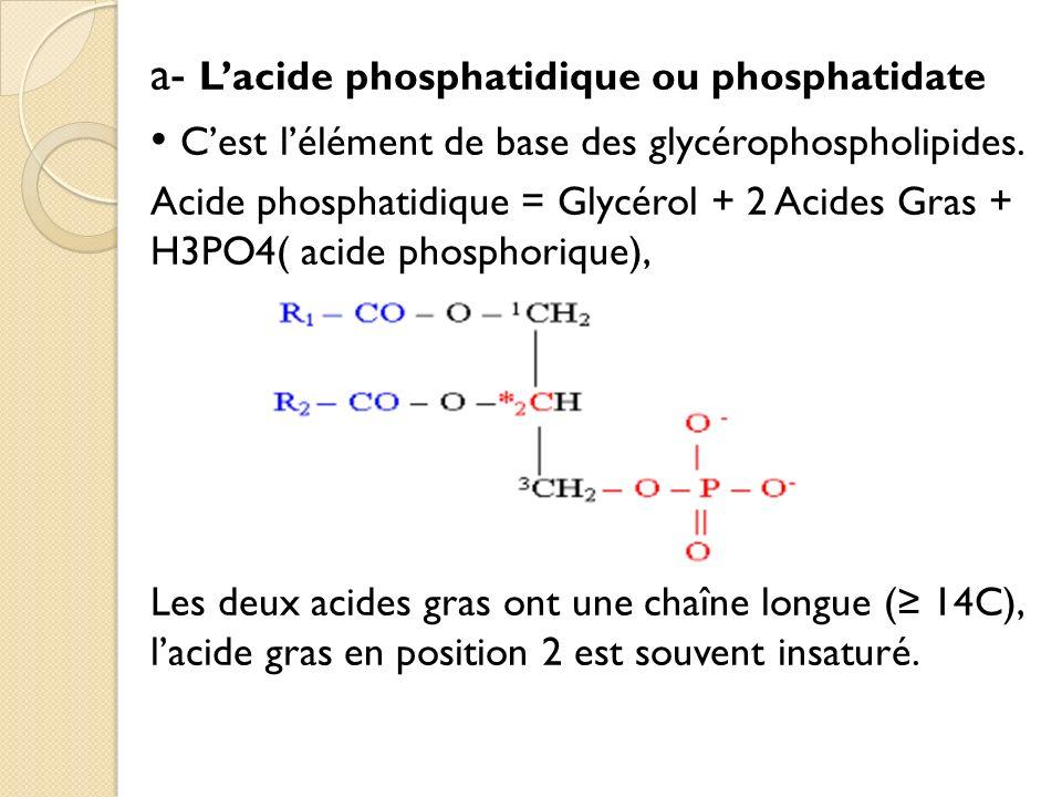 a- Lacide phosphatidique ou phosphatidate Cest lélément de base des glycérophospholipides.