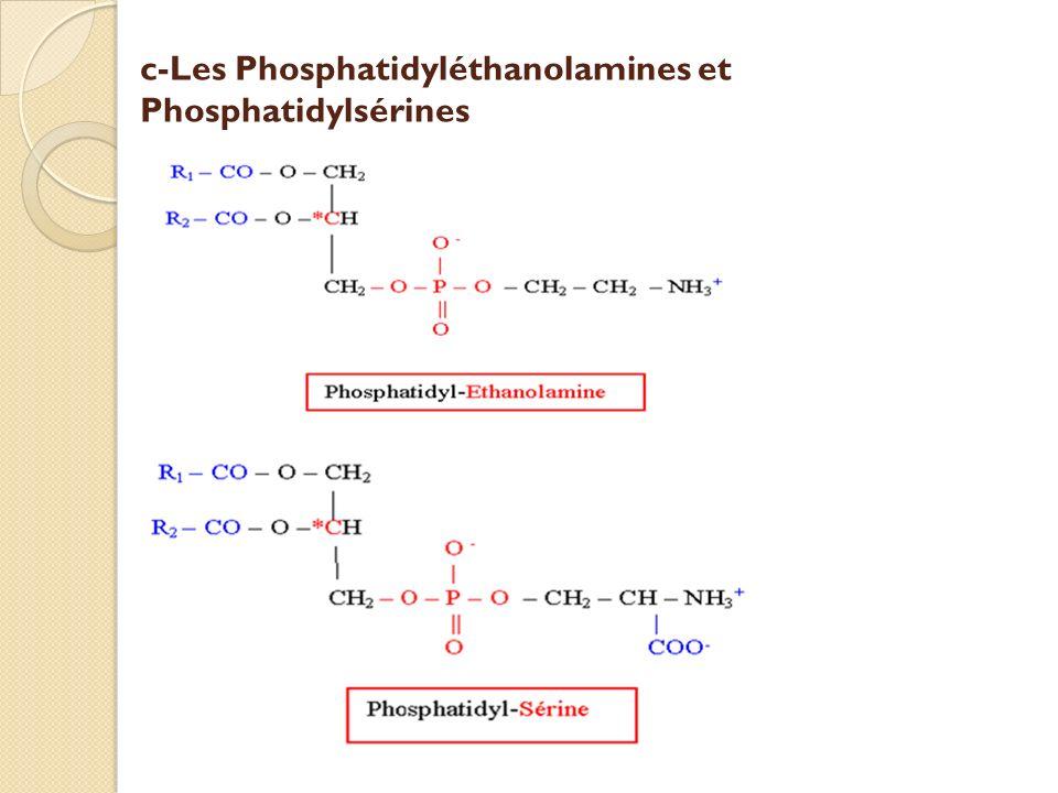 c-Les Phosphatidyléthanolamines et Phosphatidylsérines