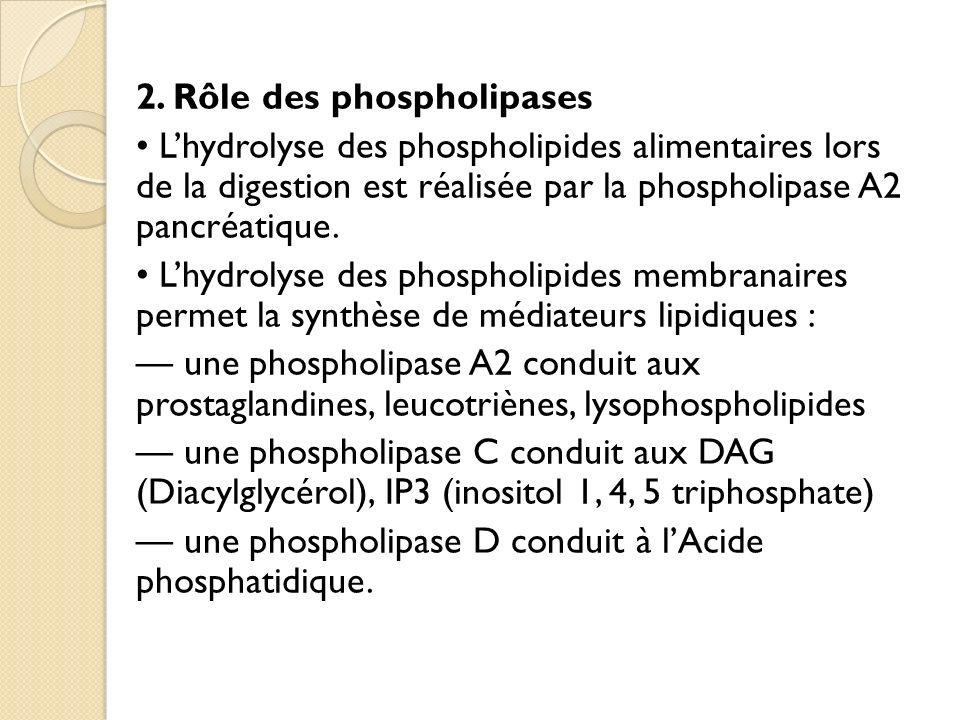 2. Rôle des phospholipases Lhydrolyse des phospholipides alimentaires lors de la digestion est réalisée par la phospholipase A2 pancréatique. Lhydroly