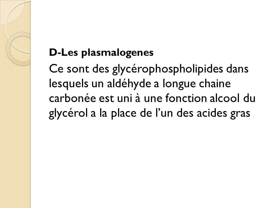 D-Les plasmalogenes Ce sont des glycérophospholipides dans lesquels un aldéhyde a longue chaine carbonée est uni à une fonction alcool du glycérol a la place de lun des acides gras