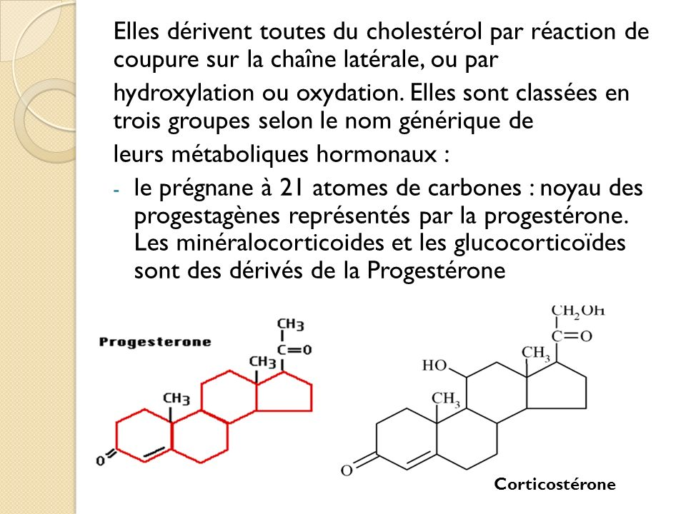 Elles dérivent toutes du cholestérol par réaction de coupure sur la chaîne latérale, ou par hydroxylation ou oxydation.
