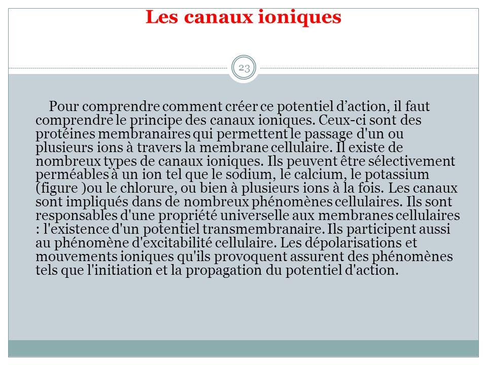 Les canaux ioniques 23 Pour comprendre comment créer ce potentiel daction, il faut comprendre le principe des canaux ioniques.