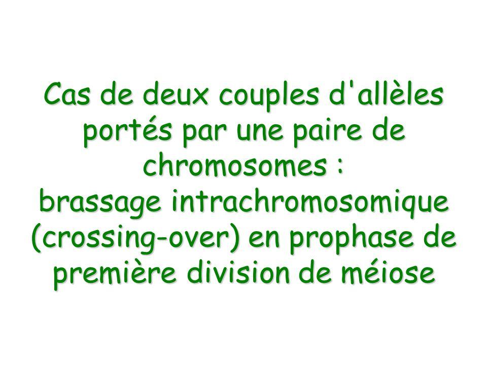 Cas de deux couples d'allèles portés par une paire de chromosomes : brassage intrachromosomique (crossing-over) en prophase de première division de mé
