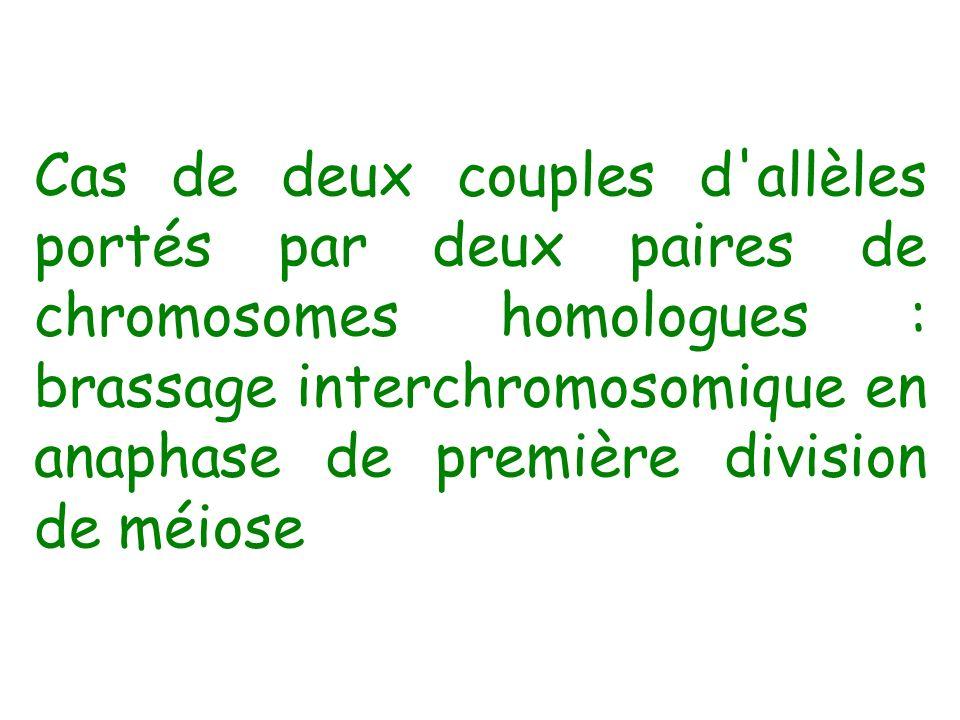 Cas de deux couples d'allèles portés par deux paires de chromosomes homologues : brassage interchromosomique en anaphase de première division de méios