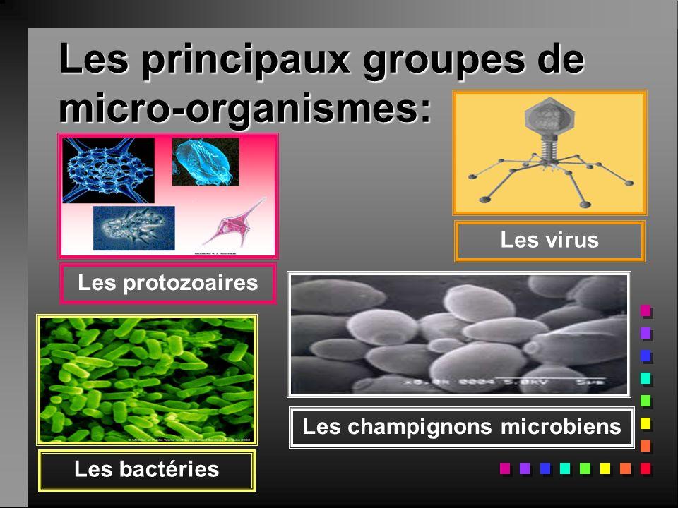 Les principaux groupes de micro-organismes: Les protozoaires Les virus Les champignons microbiens Les bactéries