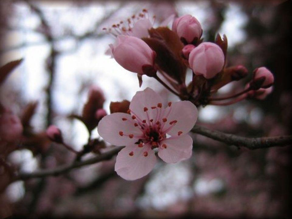 Le bourgeon éclate sous la poussée de la feuille, Verdoyante dans la lumière qui laccueille.