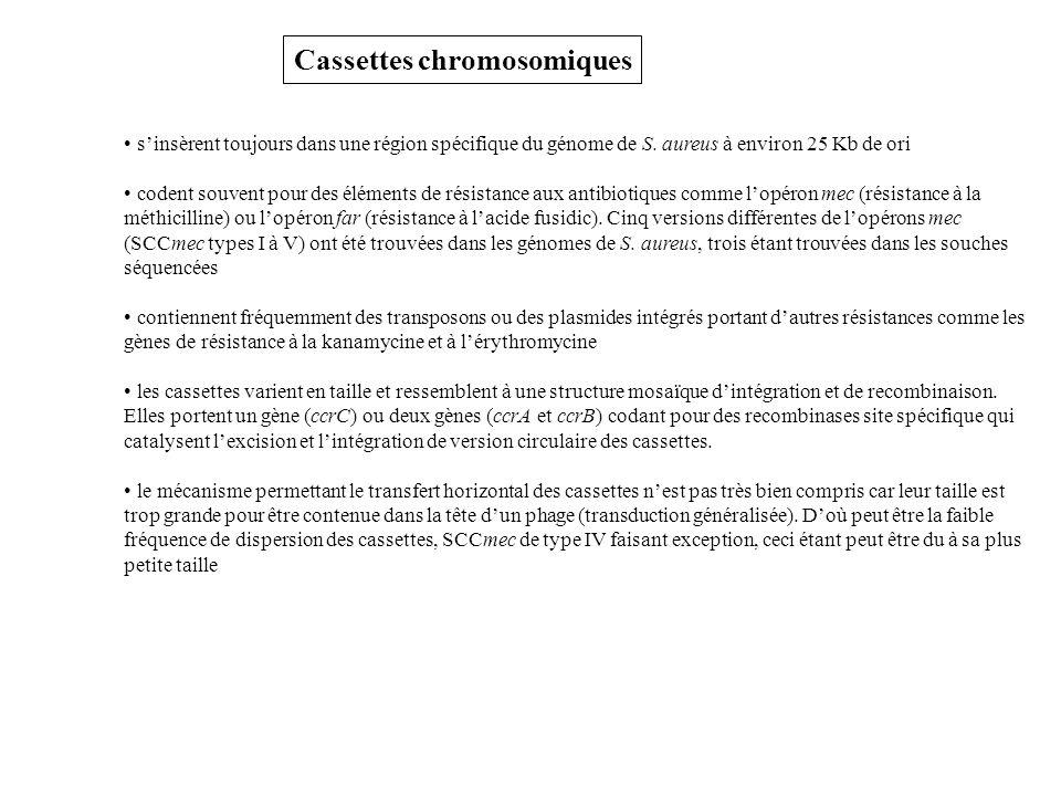 Cassettes chromosomiques sinsèrent toujours dans une région spécifique du génome de S.
