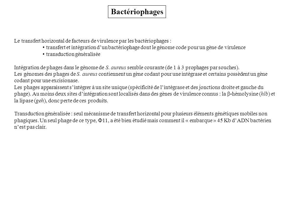 Bactériophages Le transfert horizontal de facteurs de virulence par les bactériophages : transfert et intégration dun bactériophage dont le génome code pour un gène de virulence transduction généralisée Intégration de phages dans le génome de S.