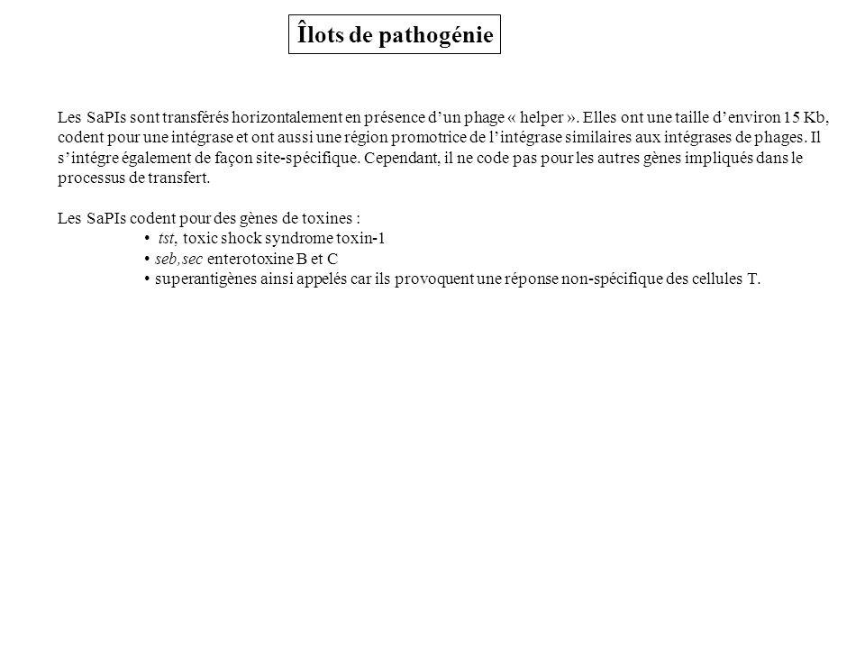 Îlots de pathogénie Les SaPIs sont transférés horizontalement en présence dun phage « helper ».