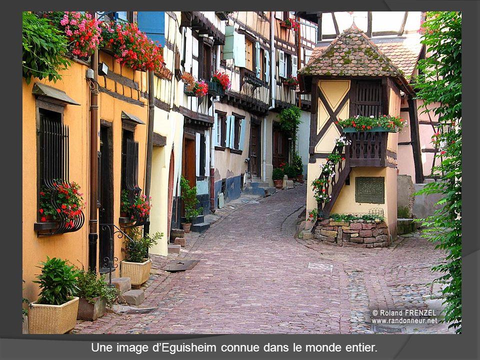 Eguisheim, berceau du vignoble alsacien de 1590 habitants, est appuyé à de douces collines plantées de vignes. Situé à une altitude de 210 mètres, au