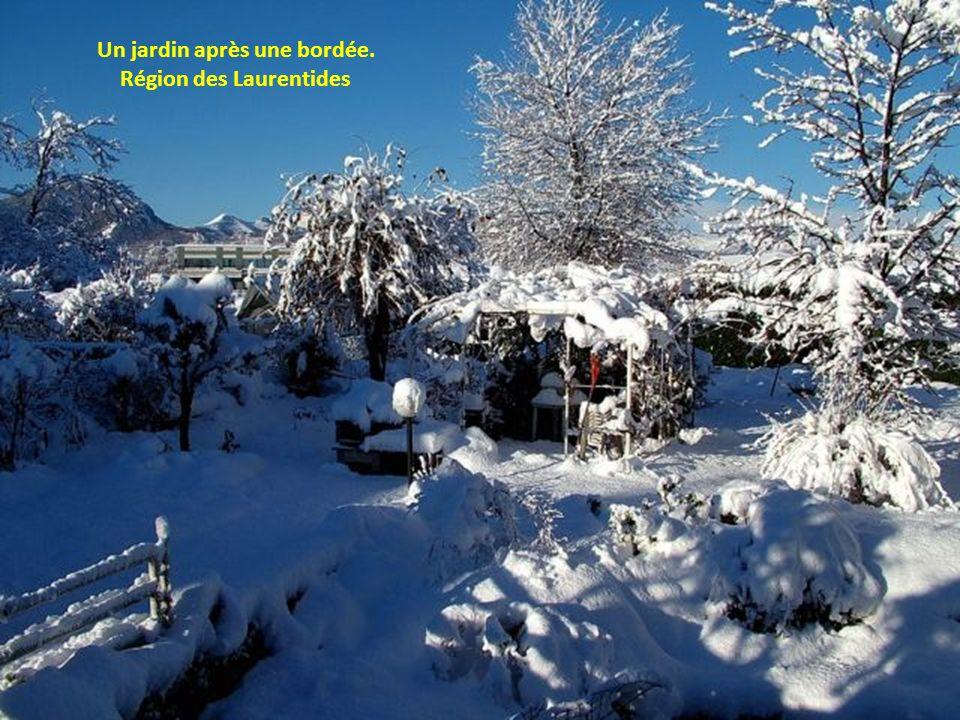 Un jardin après une bordée. Région des Laurentides