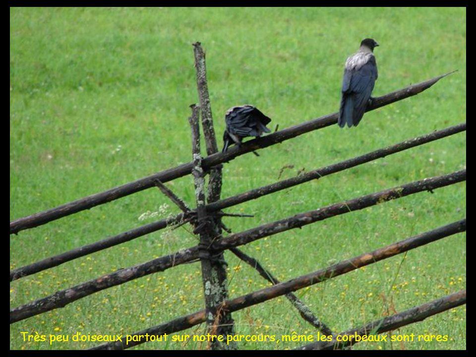 Très peu doiseaux partout sur notre parcours, même les corbeaux sont rares