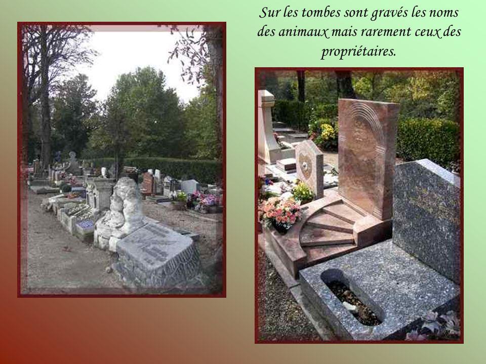 « Gribouille », ce cheval appartenait à linitiatrice de la création de ce cimetière animalier, Marguerite Durand.