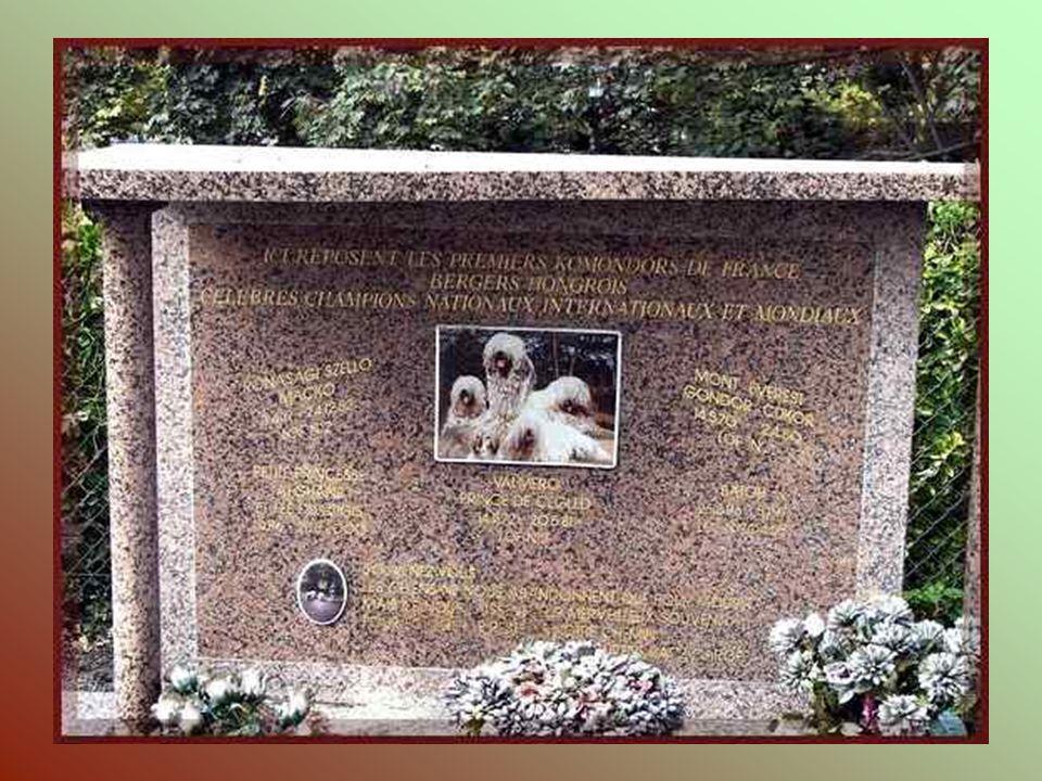 Mémère, chienne mascotte des chasseurs à pied pendant la guerre 1914/18. Drapeau, chien compagnon de guerre.