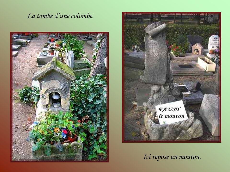 Le cimetière dAsnières ne serait rien sans la multitude des anonymes, chiens, chats, oiseaux, lapins, hamsters, poissons, chevaux et même singes, dont