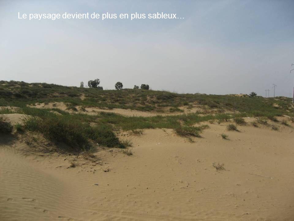 Le paysage devient de plus en plus sableux…