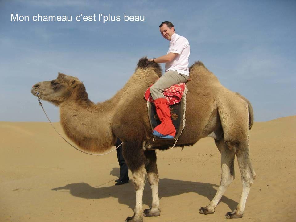 Mon chameau cest lplus beau