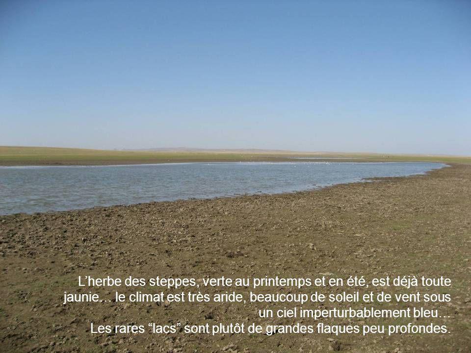 Lherbe des steppes, verte au printemps et en été, est déjà toute jaunie… le climat est très aride, beaucoup de soleil et de vent sous un ciel imperturbablement bleu… Les rares lacs sont plutôt de grandes flaques peu profondes.