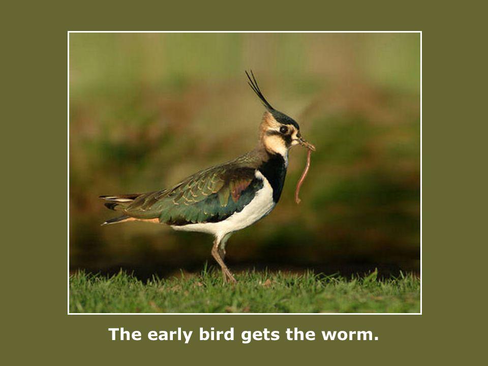 La mort est un petit oiseau qui chaque jour vient se désaltérer dans ta coupe de vin.