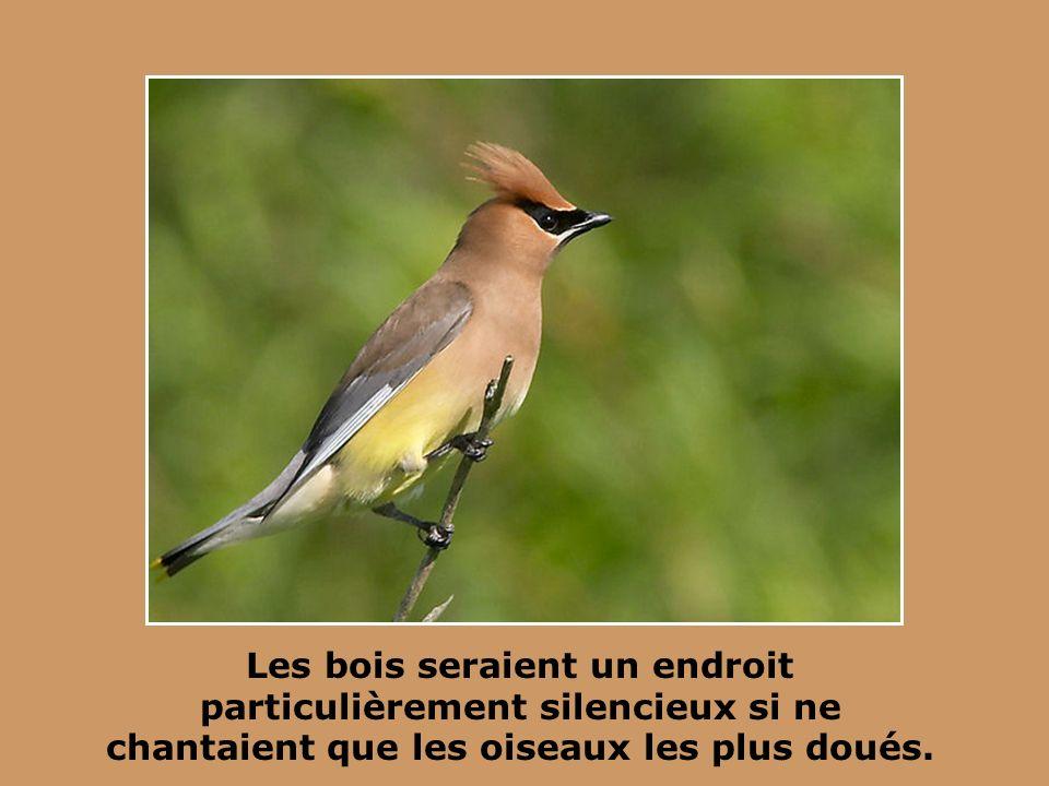 Par leurs chants et leurs cris. ils font bien plus de bruit que les autos, les oiseaux.
