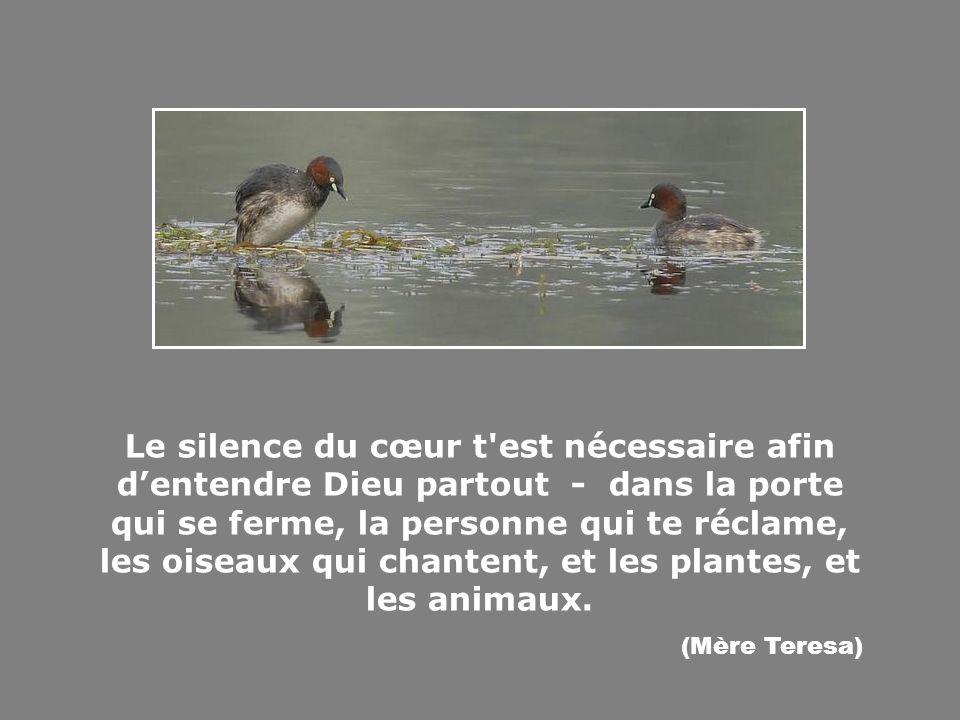 Se peut-il qu un homme soit moins sage qu un oiseau ?