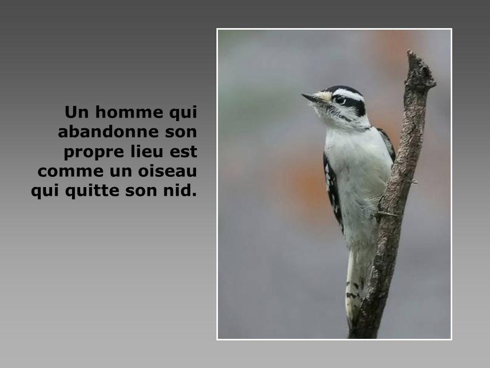 Le silence du cœur t est nécessaire afin dentendre Dieu partout - dans la porte qui se ferme, la personne qui te réclame, les oiseaux qui chantent, et les plantes, et les animaux.