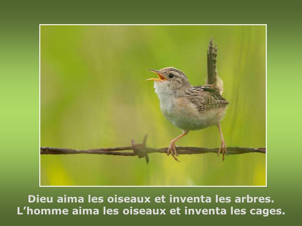 Lâme est le seul oiseau qui soutienne sa cage.