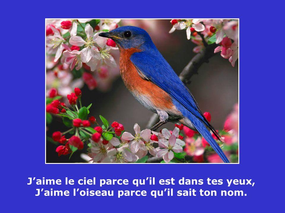 Qui n a pas dargent est comme un oiseau sans ailes, et comme un navire sans voiles.