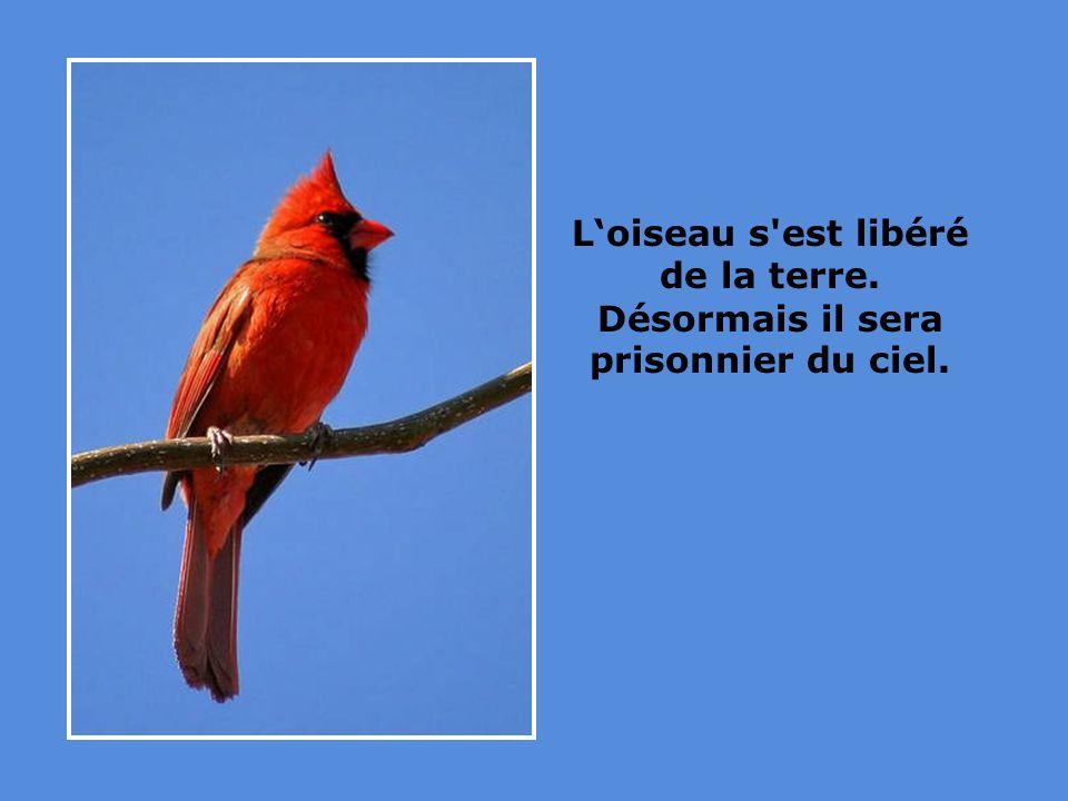 Loiseau s est libéré de la terre. Désormais il sera prisonnier du ciel.