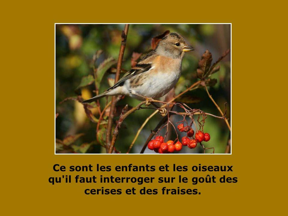 Qu y a-t-il de plus beau qu un oiseau libre qui vole vers le soleil ?