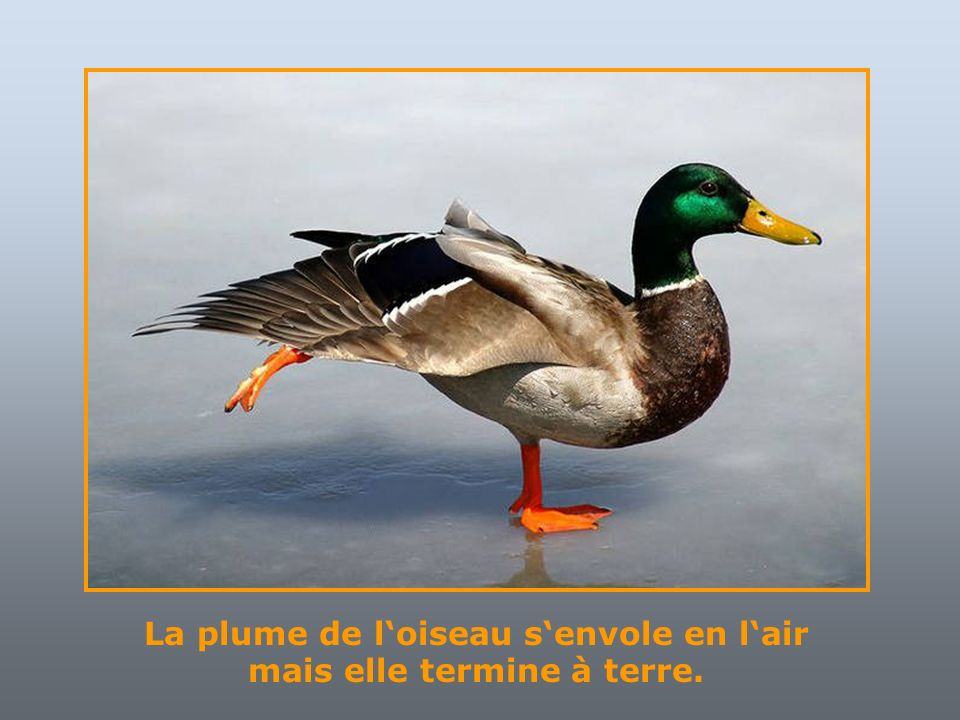 Dieu aima les oiseaux et inventa les arbres. Lhomme aima les oiseaux et inventa les cages.