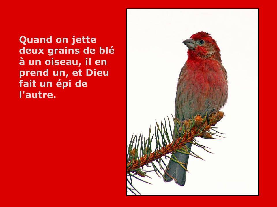 Le bonheur est un oiseau qui se pose sur la paume de ma main; pour le garder il ne faut pas essayer de le saisir.