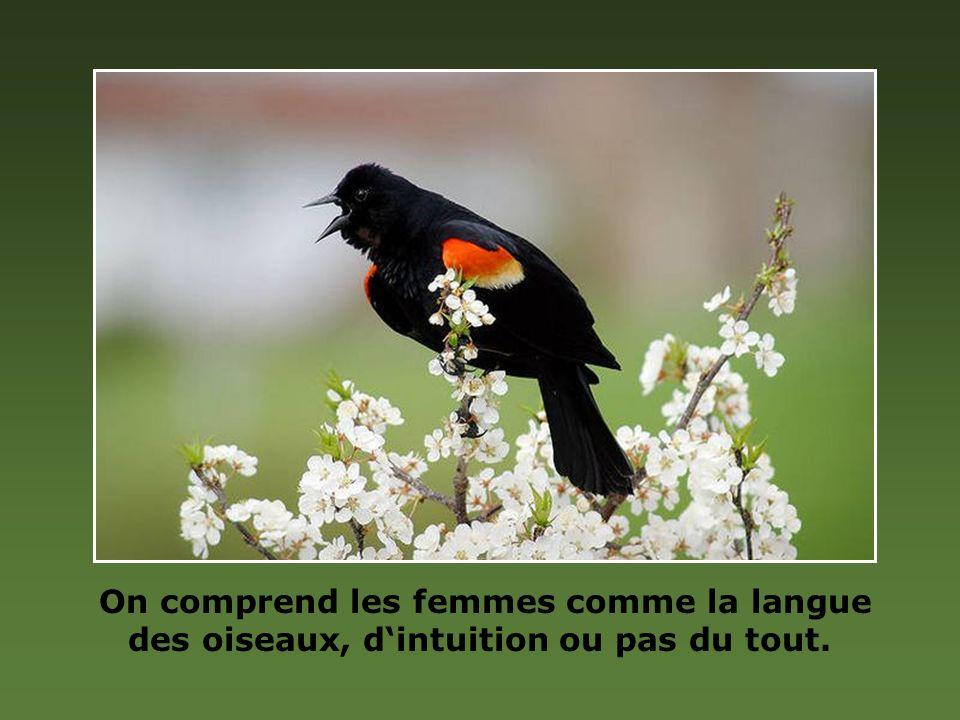 On comprend les femmes comme la langue des oiseaux, dintuition ou pas du tout.