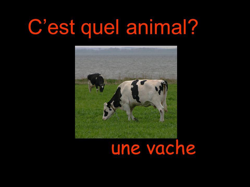 Cest quel animal une vache