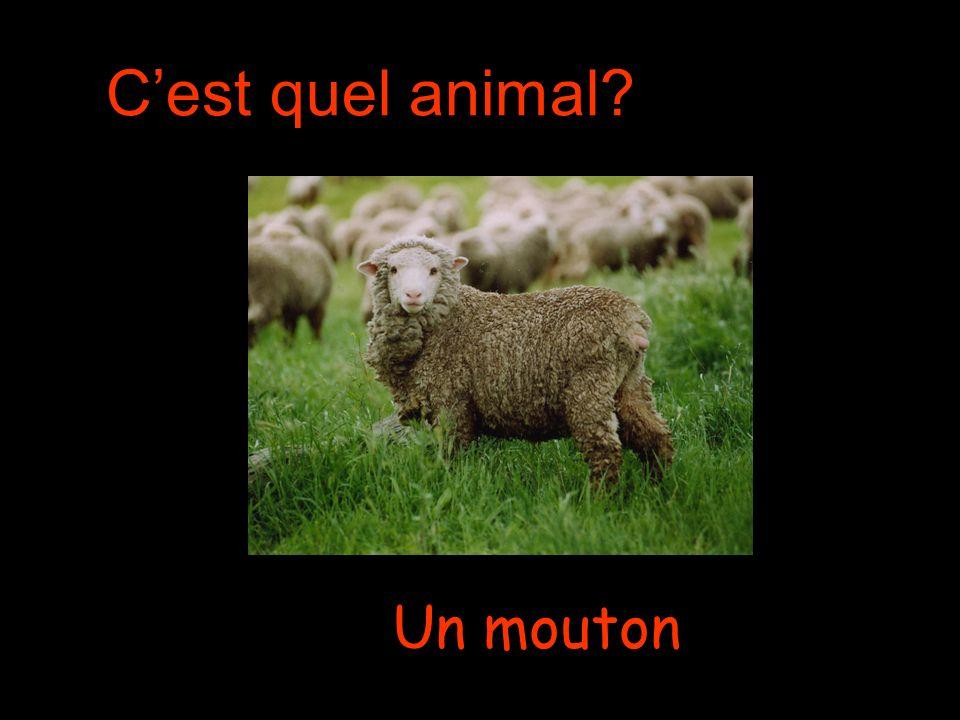 Cest quel animal Un mouton